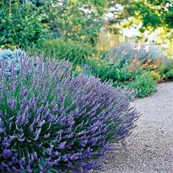 15 of our favorite drought-tolerant perennials—see them here: http://www.bhg.com/gardening/flowers/perennials/perennials-with-drought-tolerance/?socsrc=bhgpin050112droughtperennials: Drought Tolerant Front Yard, Perrenial Garden, Drought Tolerant Perennia