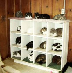 20 Brilliant Ways To Organize Your Cats - Organize Your Cats By Using Separate Cat Shelves: Crazy Cats, Animals, Lady Organizer, Crazycatlady, Funny Stuff, Organizers, Crazy Cat Lady