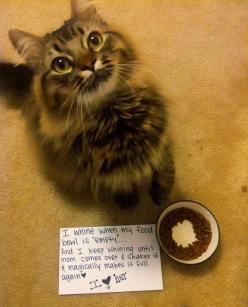 27 Hilarious Cat Confessions.  (You notice it isn't called cat shaming because unlike dogs, cats just don't care!)  I am glad I am not the only one: Cats, Kitty Cat, Funny Cat, Crazy Cat, Cat Shaming, Animal, Cat Lady, Pet Shaming