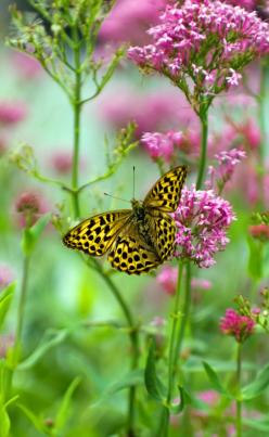 """Amongst the colour"" by David Bladon on 500px: Pink Flower, Beautiful Butterflies, Butterfly, Nature, Beauty, Birds, Photo, Garden, Beautiful Creatures"
