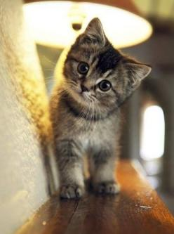 """""""An ordinary kitten will ask more questions than any 5 year old."""" ~ Carl Van Vechten: Cats, Kitty Cat, Animals, Sweet, So Cute, Pet, Cute Cat, Baby, Kittens"""