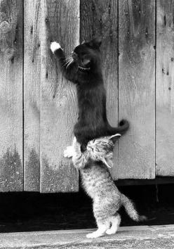 """""""Lift me up""""!!!!   """"Ok ok, your heavier than I thought. How much did you eat anyway?!!"""": Cats, Animals, Google, Friends, Pet, Funny, Kittens, Kitty"""