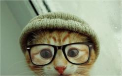 "* * "" Whaddya, nutz or sumethin' ?  Dis head gear and spex are fer humans ! "": Cats, Hipster Cat, Kitten, Animals, Pet, Hipster Kitty, Funny, Things, Hipstercat"
