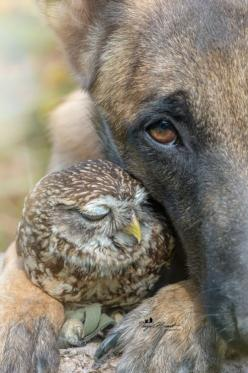 """ Winter, Spring, Summer or Fall... all you got to do is call, and I'll be there... You've got a friend."": Beautiful Friends, Amazing Owls, Baby Owl, Odd Couple, Owl Friendship, Animal Friendships, Friends Awwww, Beautiful Owls"
