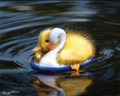 'Save the Duck' by furfree  4th place entry in Natural Rejection 3: Animals, Sweet, Duckling, Baby Ducks, Funny, Adorable, Birds, Friend