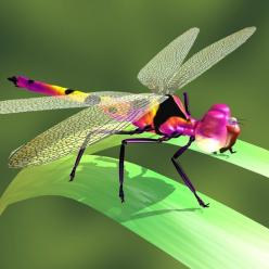 3d model of dragon fly - DragonFly.zip... by Darkrising: Butterflies Dragonflies, Dragonfly Art, Dragon Flies, Dragonflies Butterflies, Beautiful Colors, Dragonfly S, Colorful Dragonfly