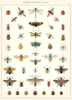 71v1dBW+M9L._SL1200_.jpg 859×1,200 pixels: Wall Art, Idea, Natural History, Wrapping Papers, Insects Wrapping, Insects Decorative, History Insects, Poster, Cavallini Natural