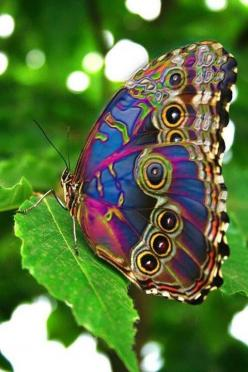923276_480006382075845_810118861_n.jpg 480×720 pixels: Beautiful Butterflies, Animals, Nature, Color, Flutterby