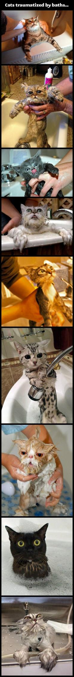 A collection of Totally Random funny stuff that you'll like (16 Pics): Kitty Cat, Cat Bath, Animals Meme, Funny Cats, Cats Traumatized, Cat Fail, Funny Animal Meme