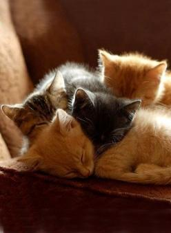 A cuddle of kittehs: Cats, Kitty Cat, Animals, Sweet, Pet, Crazy Cat, Baby, Kittens, Kitties