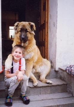 A dog and his boy - look at that big guy sitting on the steps! cute. cute.: Big Guy, Animals, Best Friends, Pet, Bestfriend, Boy, Big Dogs, Kid