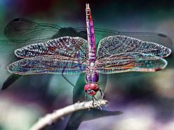 A living rainbow...dragonfly. Welcome To My Pinterest Boards... Feel free to pin what catches your eye  & inspires you. These boards are made for your enjoyment & pleasure. Thank you, & please follow me if you like.♥ Rosalyn ♥: Animals, Butter
