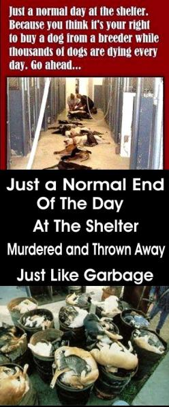 A normal Day at an Animal Shelter: Cat, Rescue Animals, Animal Cruelty, Pet, Breeder, Animal Abuse, Kill Shelters, Dog, Animal Shelter