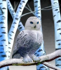 Absolutely stunning owl. #stephinge: Animals, Nature, Snow Owl, Beautiful Birds, Snowy Owl, White Owl, Owls, Eye