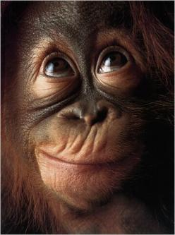 adorable: Animals, Faces, Monkeys, Primate, Smile, Photo, Funny Monkey