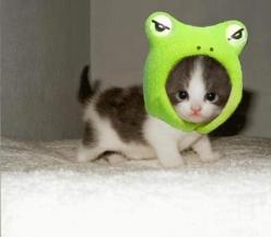adorable baby animals - Google Search  this kitty is soooo cute with his hat!: Cats, Animals, So Cute, Pet, Funny, Kittens, Frogs, Kitty