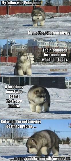 Adorable!: I M Gonna, Animals, Fluffy In, Polar Bears, Dogs, Husky, Puppy, Gonna