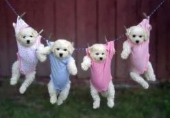 Adorable Little Puppies :): Animals, Puppies, Dogs, So Cute, Pets, Funny, Puppys, Adorable, Baby