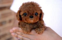 AH!!!  So adorable!: Animals, Dogs, So Cute, Pets, Puppys, Adorable, Puppy, Baby