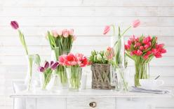 ahhh . . . reminds me it's Spring: Spring Flowers, Favorite Flowers, Idea, Flower Arrangements, Flower Power, Tulips, Things, Garden, Floral