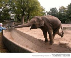 All for a flower… Why I love elephants so much.: Picture, Animals, Sweet, So Happy, Things, Smile, Photo, Flower, Elephants 3