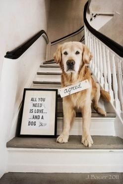 All you need is love...and a dog!: Animals, Dogs, Quotes, Pets, So True, Puppy, Things, Friend, Golden Retriever