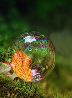 Amazing Bubble.: Photos, Nature, Autumn Leaves, Beautiful, Bubbles, Dew Drop, Pictures, Photography, Autumn Leaf