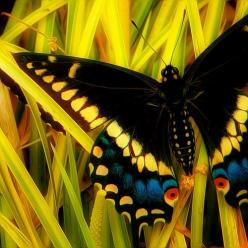 Amazing butterfly: Beautiful Butterflies, Butterflies Dragonflies Moths, Flutterby, Photo, Animal