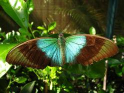 amazing butterfly: Beautiful Butterflies, Color, Wings, Photo, Garden, Animal