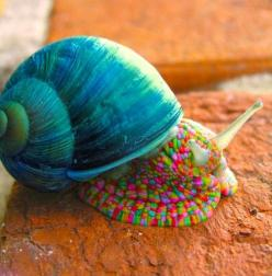 Amazing India Animals~ Kuzzin' Kim Katie, you need this one for your collection! Tutti Fruiti escargot! ;): Snails, Animals, Nature, Creature, Colorful, Colors, Beautiful, Amazing Animal, Rainbow