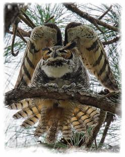 Amazing Owl Photo: Animals, Nature, Owl Photo, Beautiful Birds, Owls