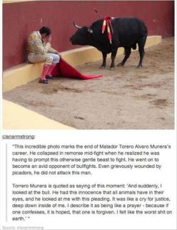 "Amen... Not very funny, but, I'm not starting a ""touching moments"" board.: Animal Rights, Ferdinand The Bulls, Animal Cruelty, Animal Abuse, Faith In Humanity Restored, Anti Bullfighting, Amazing Sad"