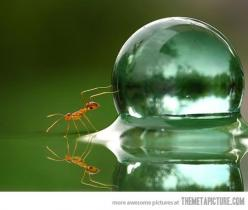 An ant and a water droplet: Bubble, Animals, Nature, Ant Pushing, Pushing Water, Ants, Ant Pushes, Water Droplets, Photo