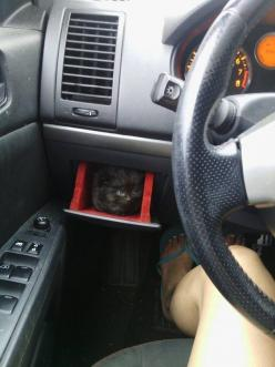 And this kitten who found a new use for the glove compartment. | 39 Overly Adorable Kittens To Brighten Your Day: Cats, Car, Animals, Post, Funny, Kitten Holder, Kittens, Kitty, Photo
