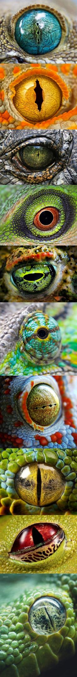Animal Eyes - Inspiration for glass bead makers.: Animal Eyes, Beautiful Animal, Reptilian Eye, Eyes Animal, Reptile Eyes, Dragon Eye, Amazing Animal, Beautiful Eye