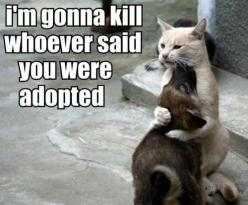 animal love: Cats, Animals, Dogs, Pet, Funny Stuff, Funnies, Funny Animal