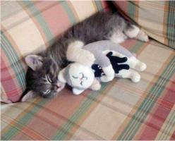 Animals cuddling with their stuffed animal selves: Cats, Animals, Sweet, Pets, Adorable, Kittens, Photo, Kitty