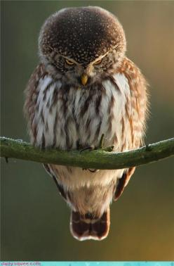 ♥: Animals, Nature, Funny, Things, Angry Birds, Photo, Owls, Hoot