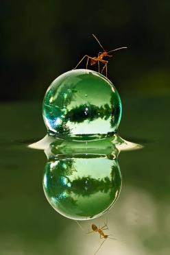 Ant & World by teguh santosa, via 500px: Reflection, Nature, Waterdrop, Dew Drop, Ants, Photo, Water Drop, Animal