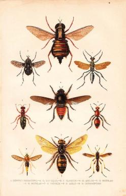 Antique Print Insects Natural History Lithograph 1920: Natural History, Insects Natural, History Lithograph, Entomology Chromolithograph, Print Insects