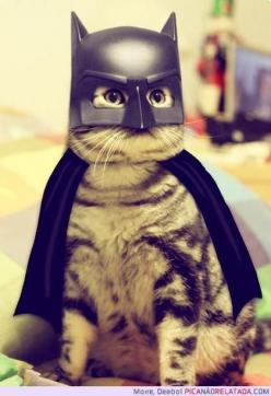 "Anyone has the internal power to be whatever they want to be - to create their own path and sculpt their own life. Think outside the box of ""normal."" If you want to be Batman, be Batman!: Cats, Batcat, Animals, Bats, Pet, Funny, Costume, Batman"