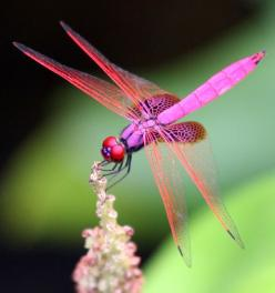 """As a creature of the wind, the dragonfly represents change. As a creature of the water, they represent the subconscious, or """"dream"""" state.    Other symbolic meanings associated with dragonflies, are prosperity, strength, courage, peace, harmony an"""