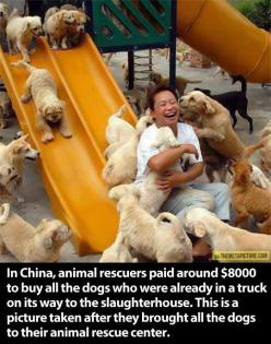 Awe;): Picture, Animal Rescue, Animals, Dogs, Humanity Restored, Pet, Faith In Humanity, Puppy, Things