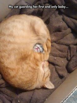 awww: Cats, Babies, Cat Guarding, Animals, Cat Love, Funny Animal, Kitty, Baby Cat
