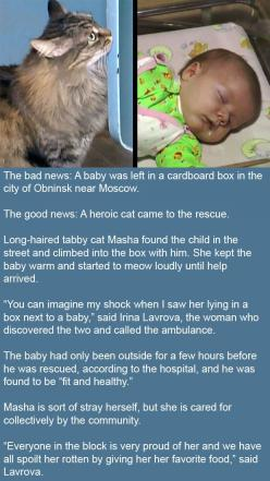 Awwwe!: Cats Cats, Abandoned Baby, Cat Baby, 3 Kitty Cats So, Cats Restored, Awesome Cat, Cats Aren T, Saves Abandoned, Cat Saves