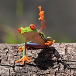 B**ch I don't give a f**k!: Animals, Shikhei Goh, Stuff, Nature, Tree Frogs, Creature, Funny, Photo