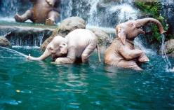 Baby elephants bathing. I've kept coming back to this photo all day. They look a lot like baby people to me, in a way that feels a little eerie.: Water, Babies, Animals, Happy Elephants, Baby Elephants, Fun, Photo
