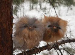 Baby owls.... Uhh not real but super cute: Babies, Animals, Babyowls, Nature, Baby Owls, Adorable, Cute Babies, Birds