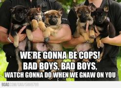 ♫Bad boys, bad boy, watcha gonna do when we gnaw on you?♪ :3: Bad Boys, Animals, Dogs, Cops, Funny, German Shepherds, Puppy