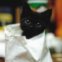 Bag o' kitty: Kitty Cats, Black Cats, Kitty Kitty, Baby, Black Kittens, Blackcats, Peek A Boo, Animal